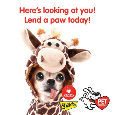 Lend a paw today